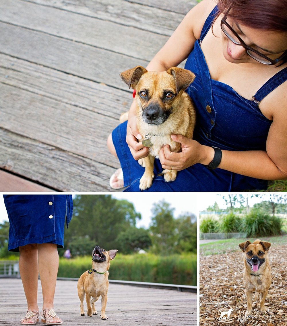 Jack Russell/Pug dog sits in her owners lap, grins up at her owner lovingly during her walk along a boardwalk and smiles amid the bark and greenery at Sydney Park during her professional photoshoot with Sydney based pet photographer, Pawtastic Photography.
