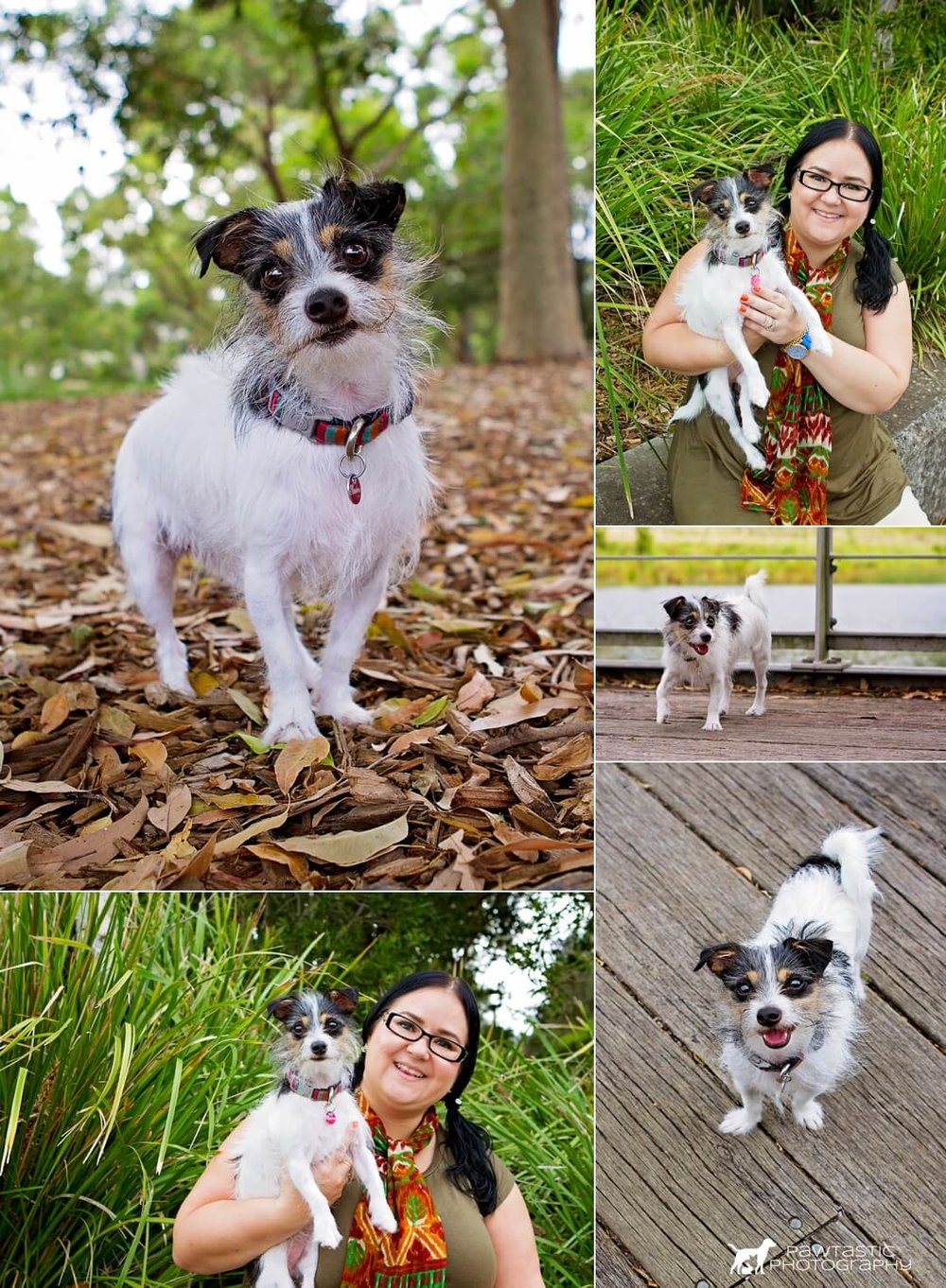 See a shorter pet photography session with Pawtastic Photography, featuring Blossom. A cute and scruffy dog playing in Sydney Park.