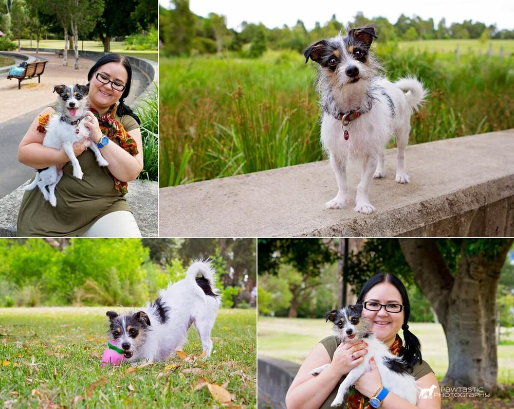 Blossom, the small chihuahua cross dog plays with her toys and gets cuddles with her mum at Sydney Park during her photoshoot with professional pet photographer, Pawtastic Photography.