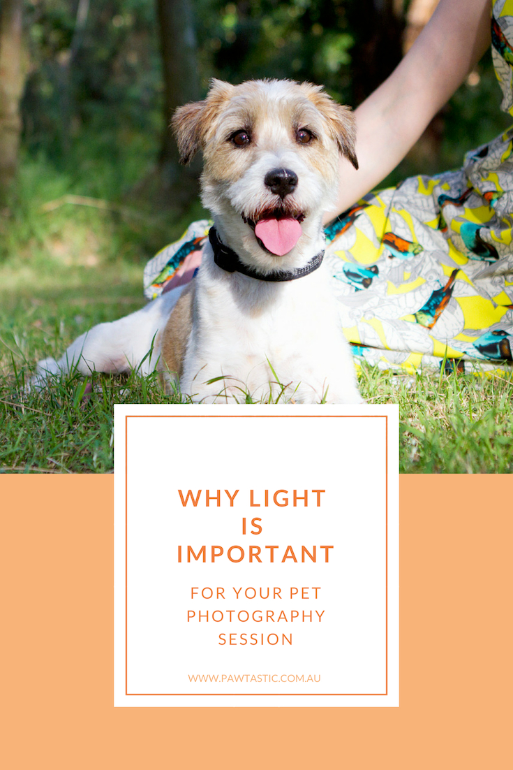 Have you ever wondered why your pet photography session was scheduled for a certain time during the day? This post explains why light is important to your pet photography session with Sydney based pet photographer, Pawtastic Photography.
