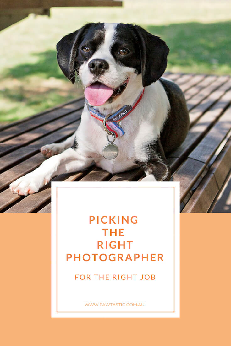 Sydney pet photographer, Pawtastic Photography, talks about picking the right photographer for the right job. If you've ever questioned what you should be looking for in a photographer - this is the blog post for you.