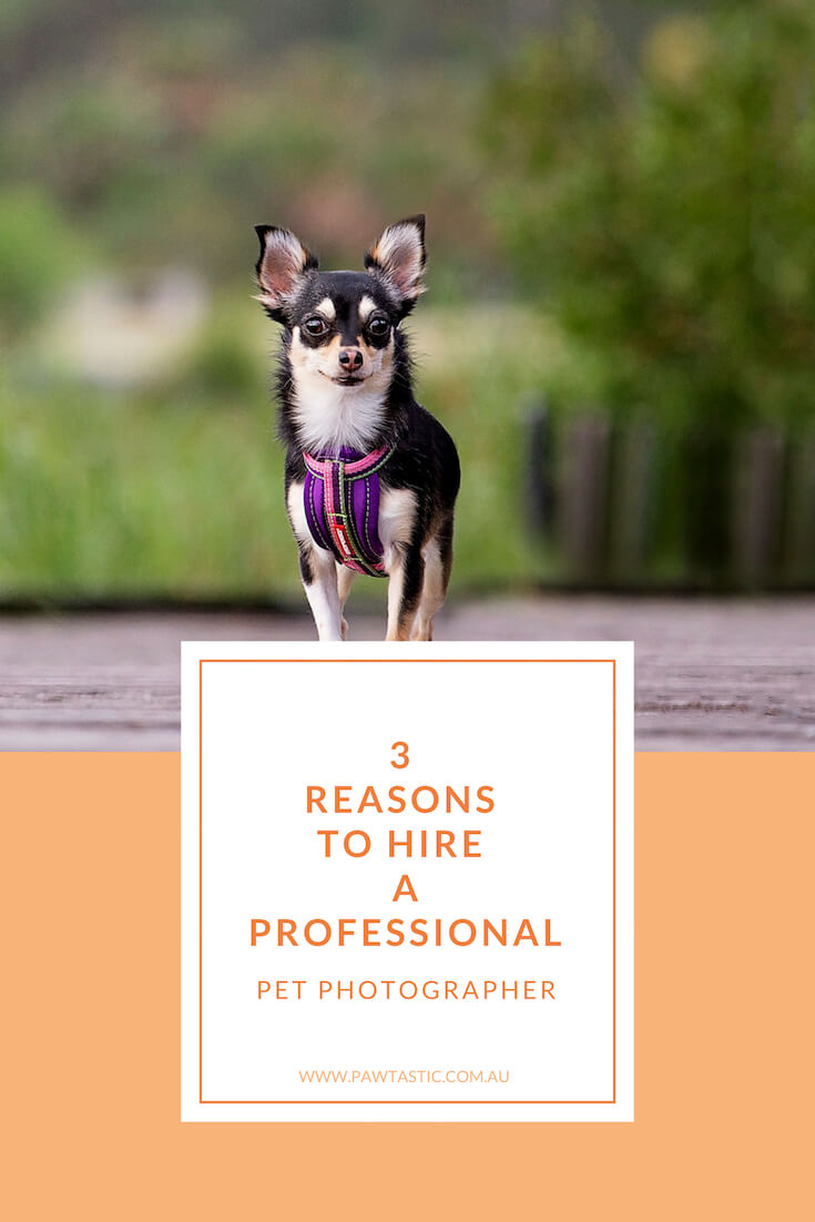 Many people don't know that there is such a thing as professional pet photographers. In this blog post I explain 3 reasons why you should hire a professional pet photographer to capture gorgeous imagery of your pet.