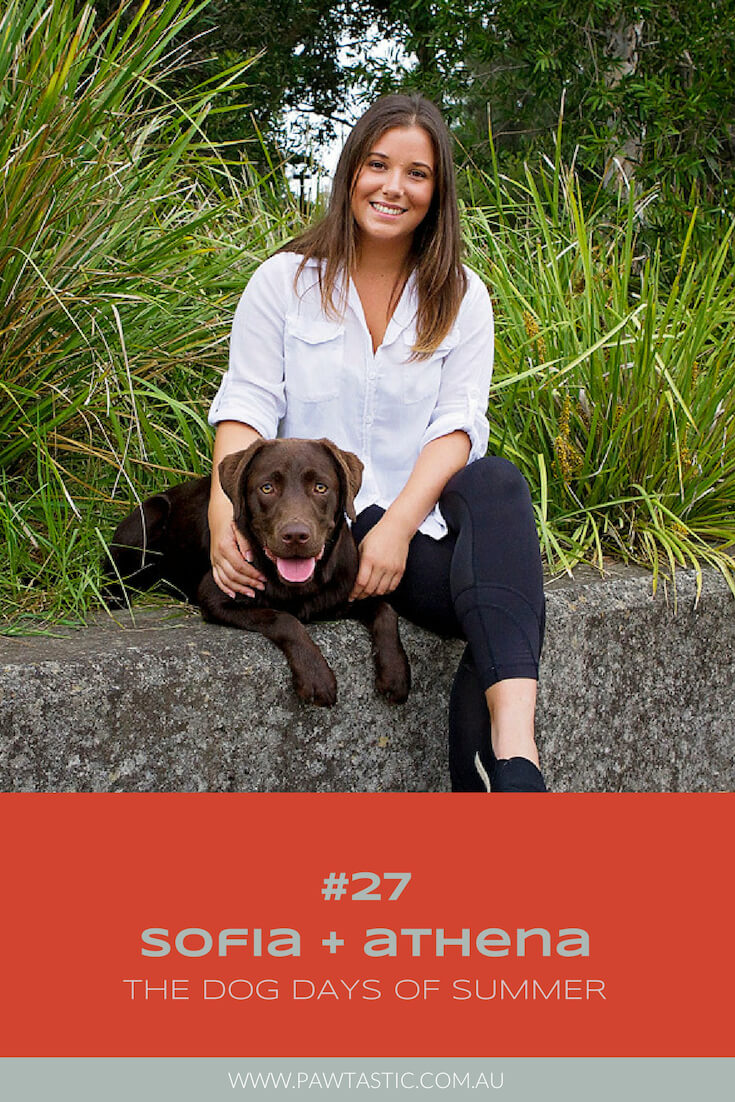 Chocolate Labrador, Athena along with her mum, Sofia pose among the green bushes at Sydney Park during their Dog Days of Summer photoshoot with Pawtastic Photography, a Sydney based professional pet photographer.