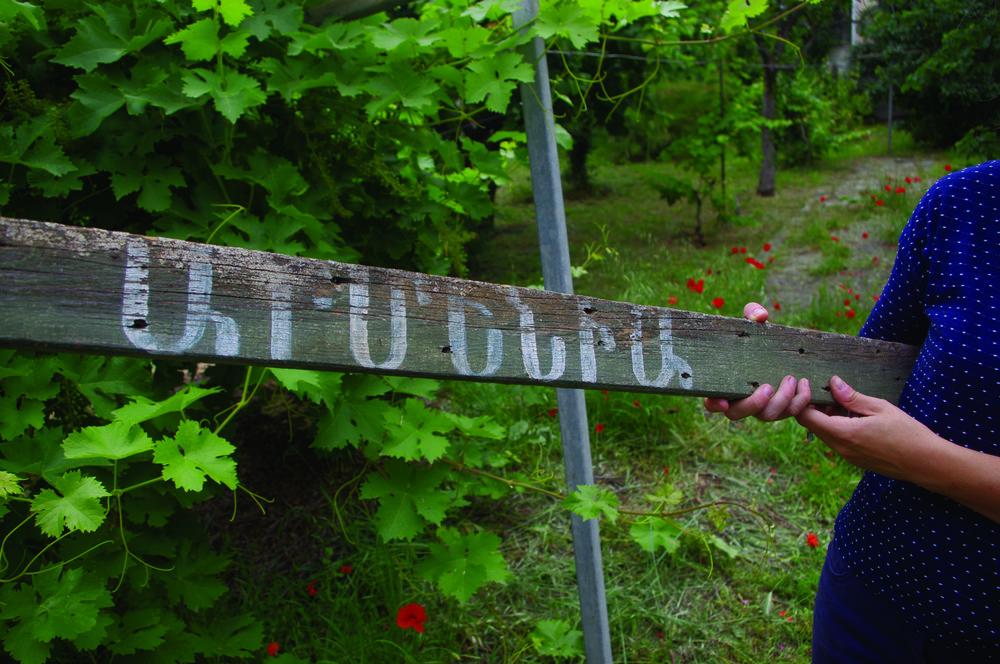 """Planche """"Armenia"""" du nom d'un cépage de raisin d'Arménie planté dans un jardin du quartier de Saint-Jérôme."""