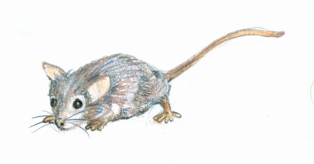 moug = mouse
