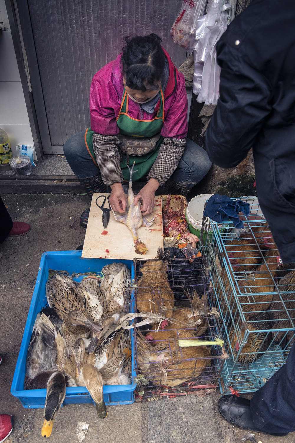 suzhou_markets_chicken