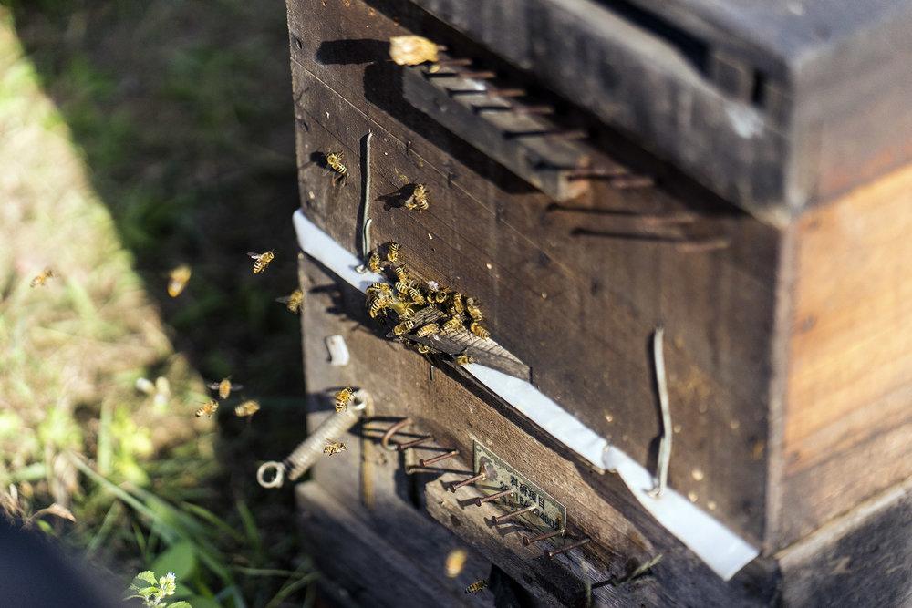 beekeeper_xishuangbanna_hives