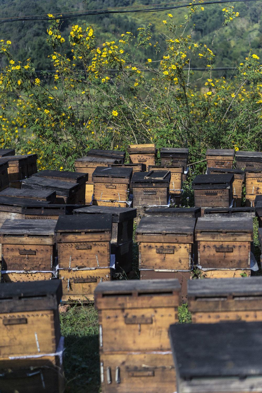 beekeeper_xishuangbanna_yunnan_china