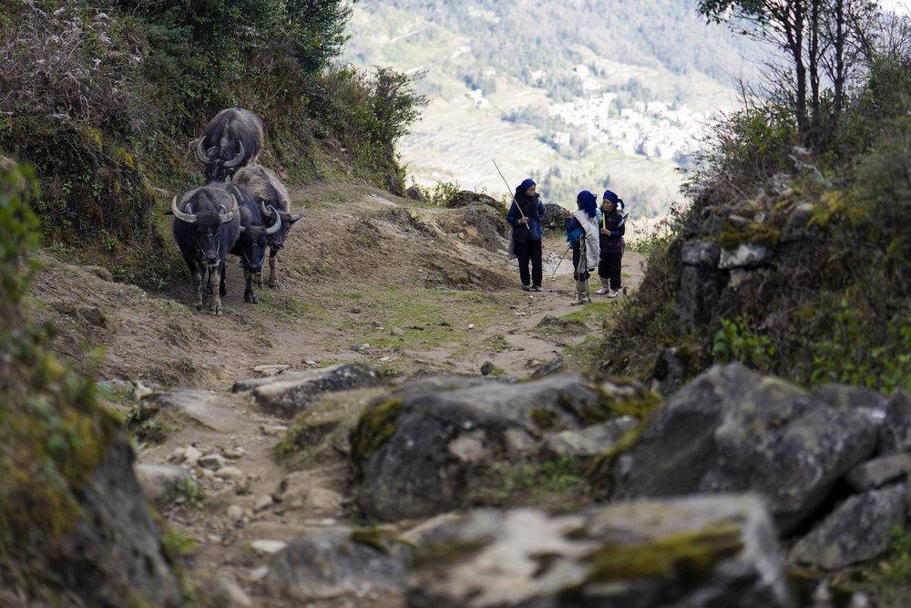 yuanyang_rice_terraces_climbing
