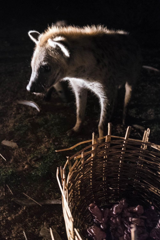 Hyena_04456.jpg