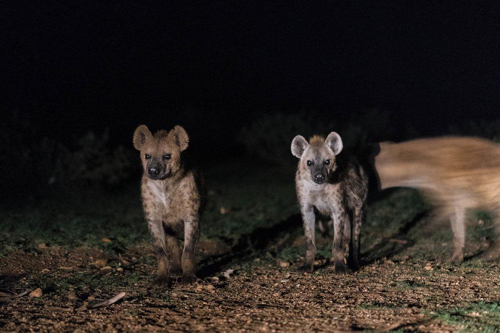 Hyena_04611.jpg