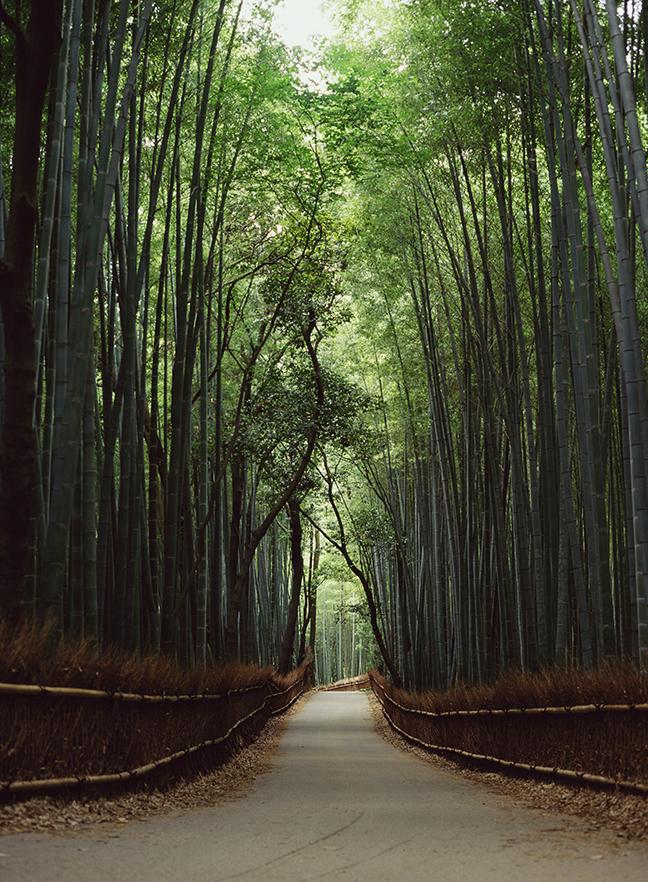 bambooforestkyoto.jpg