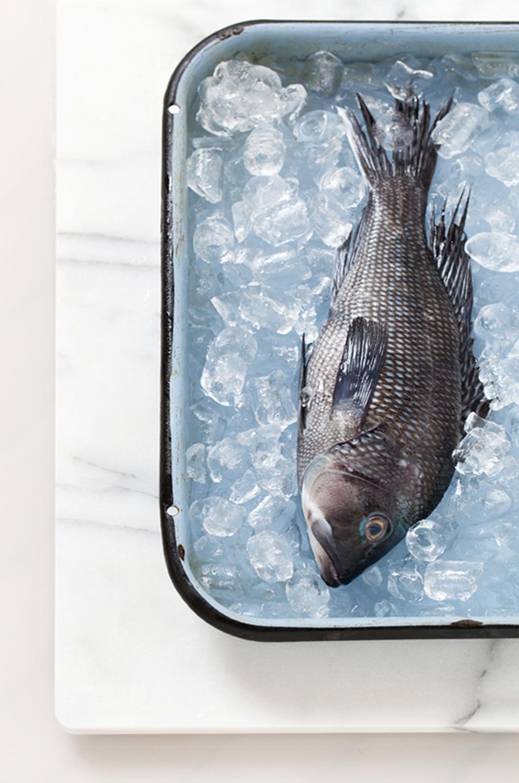 fish_cropresize.jpg