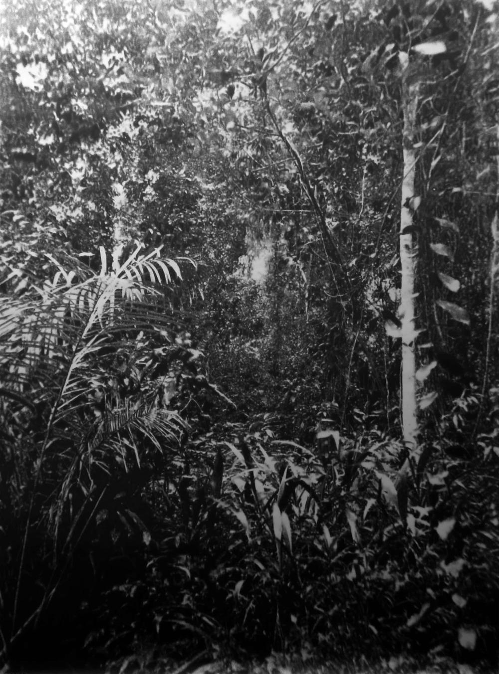 """Éric Manigaud, """"Jungle #6, palmes et lianes"""", 132 x 179 cm, 2008"""