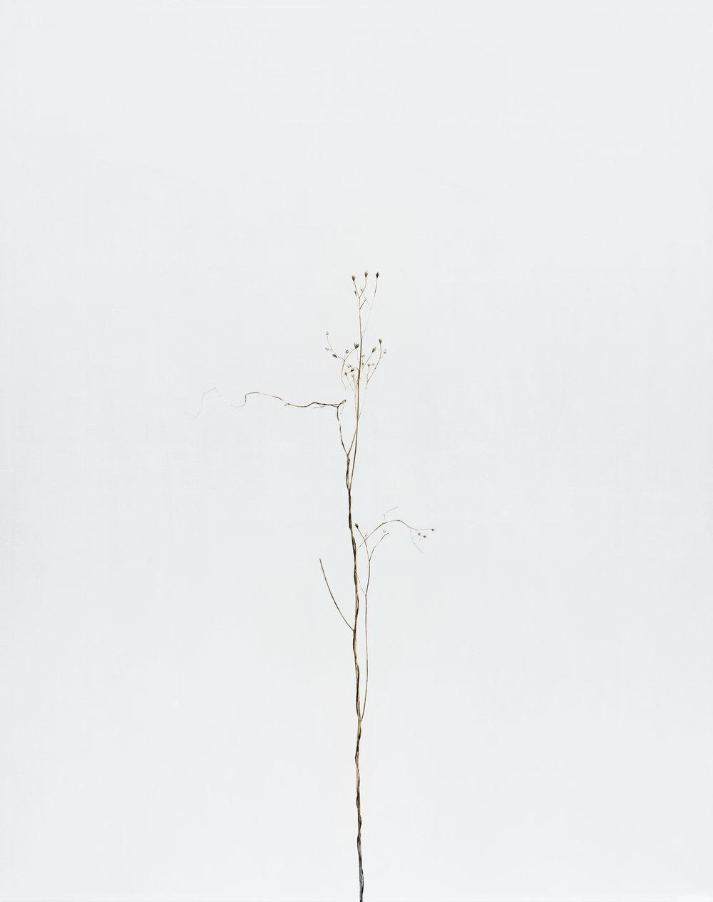 """Éric Poitevin, """"Sans titre"""", de la série """"Plantes sèches"""", 2014"""