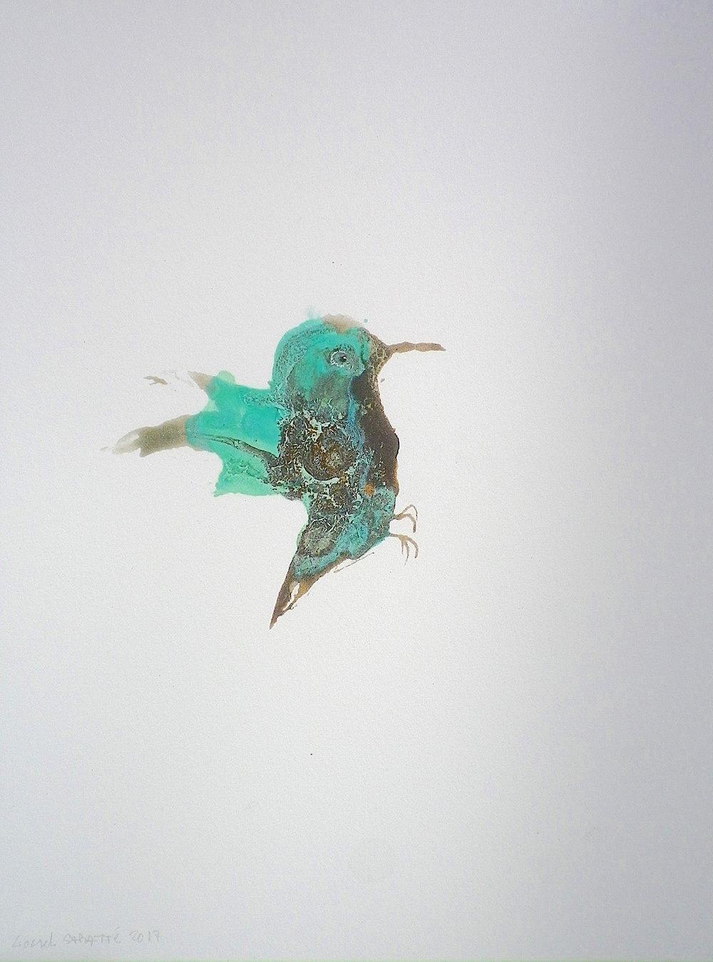 Lionel-Sabatte-sans-titre-colibri#2.JPG
