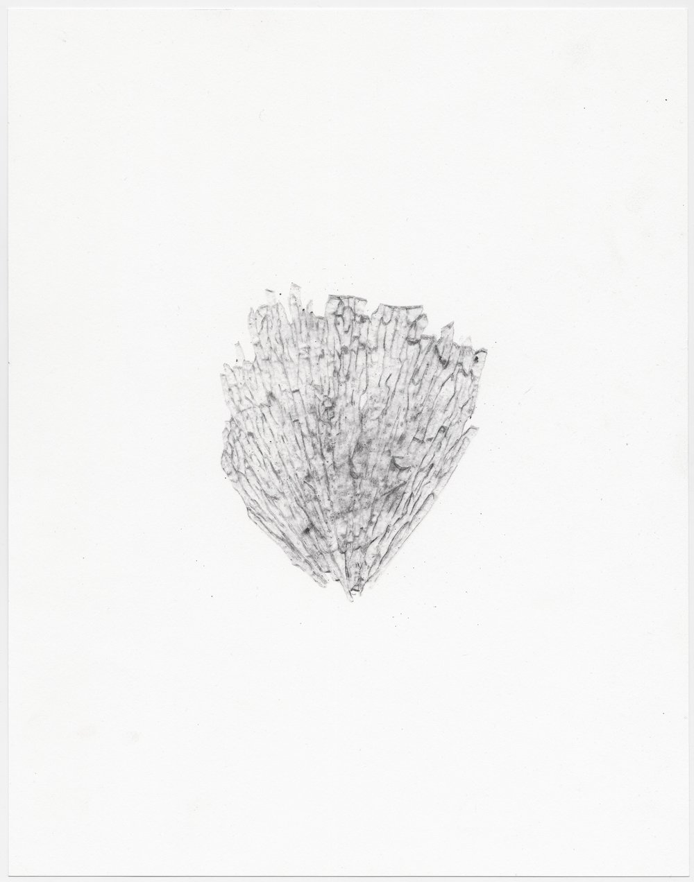 """© Sophie Jodoin, """"elle commence ici 18"""", graphite et transfert carbone sur papier Stonehenge, 35,5 x 28 cm, 2018. Courtesy Galerie C"""