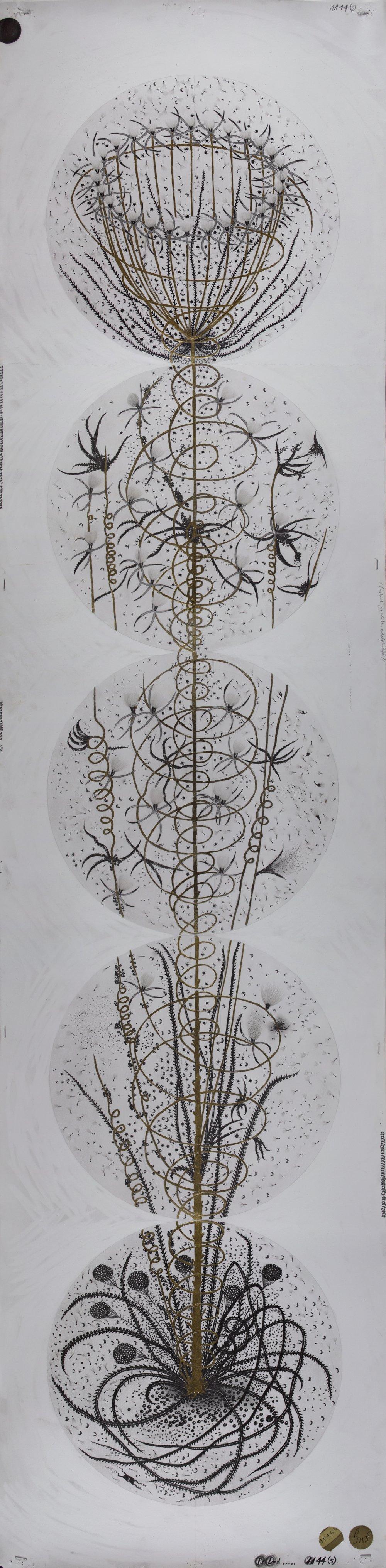 """© Hipkiss, """"1144- Instar 5"""", 165x40 cm, mine de plomb, encre argentée et feuille d'or blanc sur papier Fabriano 4, 2018, Courtesy Galerie C"""