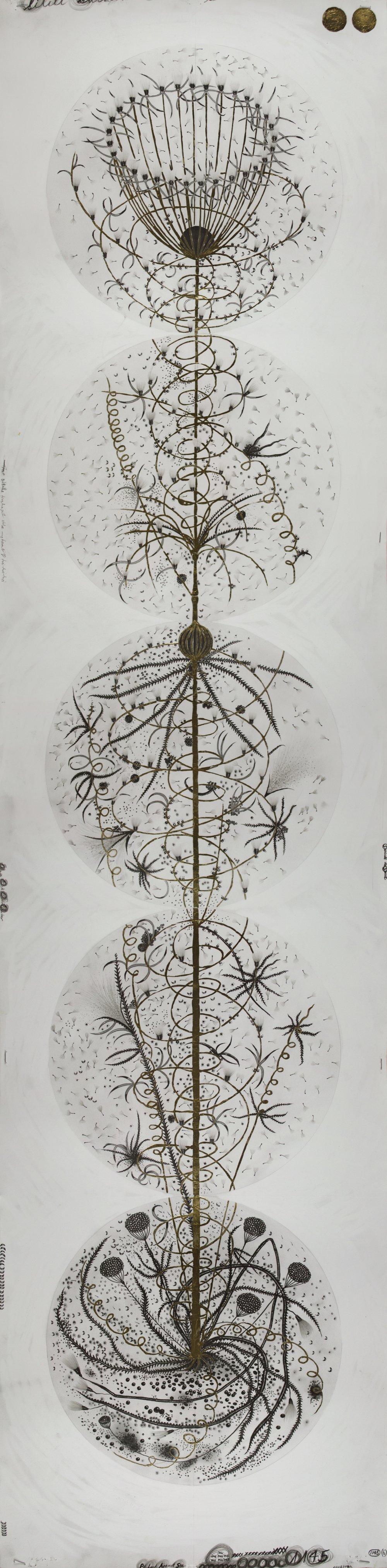 """© Hipkiss, """"1145 - Instar 6"""", 165x40 cm, mine de plomb, encre argentée et feuille d'or blanc sur papier Fabriano 4, 2018, Courtesy Galerie C"""