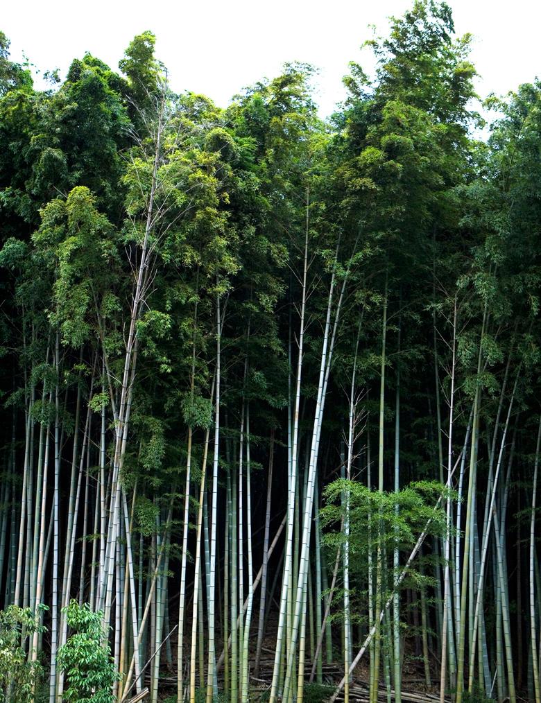 JDeLeo-Bamboo.jpg