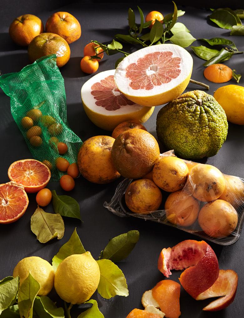 JDeLeo-Citrus.jpg