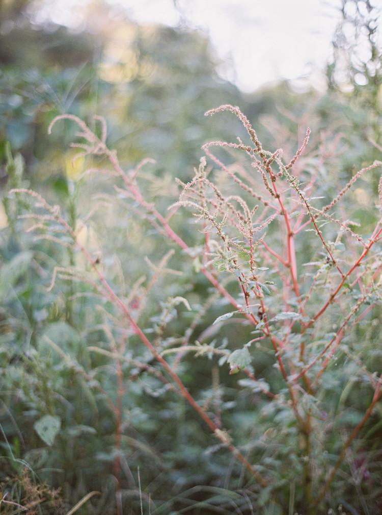amelia_johnson_photography_wollam_gardens00016.jpg