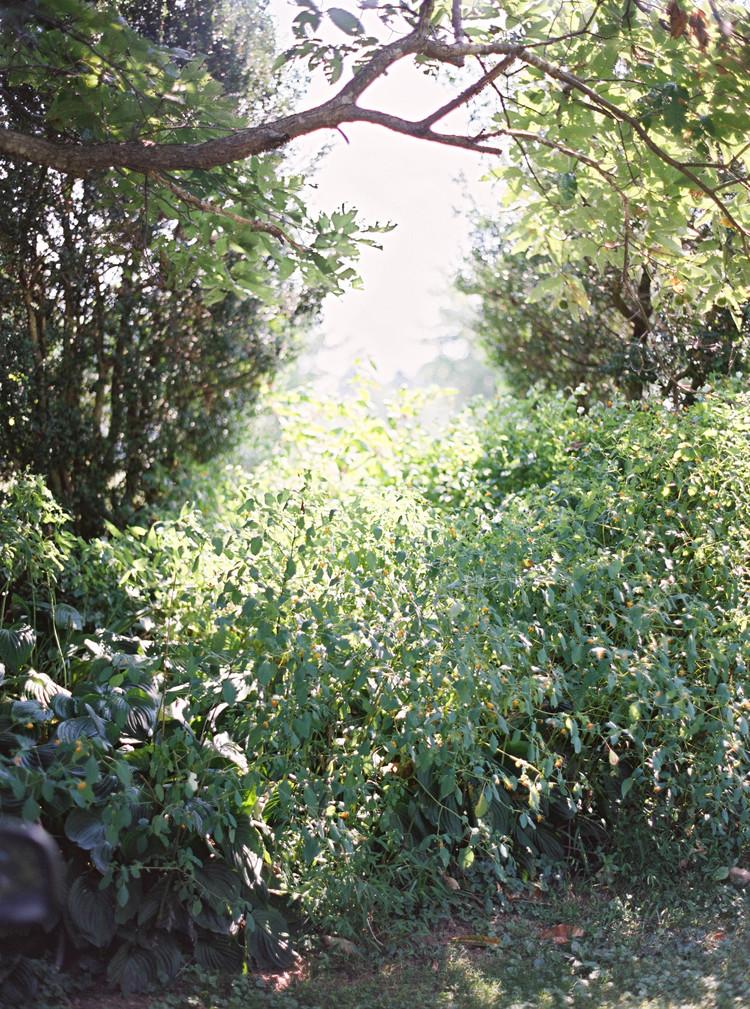 amelia_johnson_photography_wollam_gardens00050.jpg