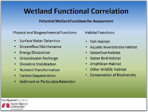 Some examples of ecological functions that wetlands can perform