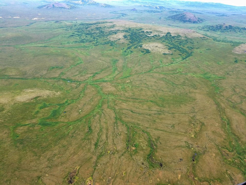 Example of the dense network drainage off the saturated sloped wetlands in tributary areas of the Kuskokwim River Darinage.  Photo Credit: Kevin Stark