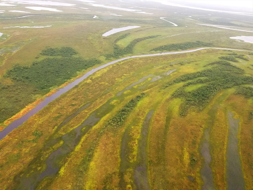 Meander scars from thousands of years of channel migration in the Kuskokwim River Drainage. The bright orange and yellow areas are moss-dominated wetlands.  Photo Credit: Kevin Stark
