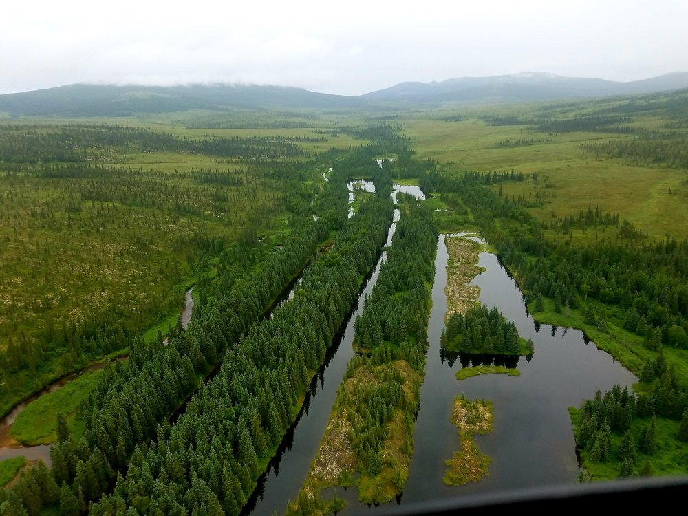 Nyac Gold Mine area dredge tailings with mature white spruce established on them.  Photo Credit: Kevin Stark