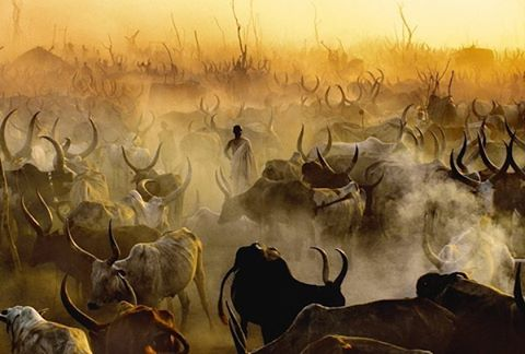 ✨ Dinka Cattle Camp at Sunset, South Sudan by Carol Beckwith and Angela Fisher #art