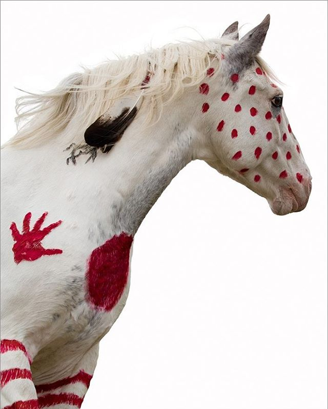 #Warrior - Blackfeet War Pony by #BradyWilette @warponyart #art