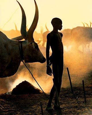 ✨ Dinka Boy with Namesake Ox, South Sudan by Carol Beckwith and Angela Fisher #art