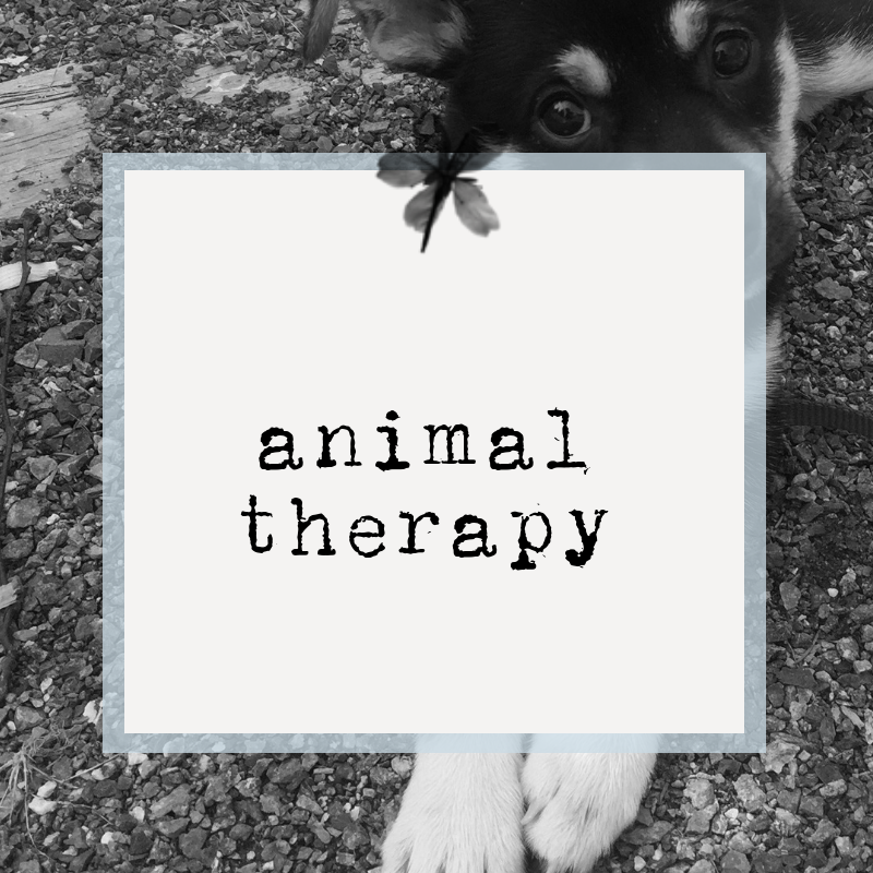 animal therapy.png