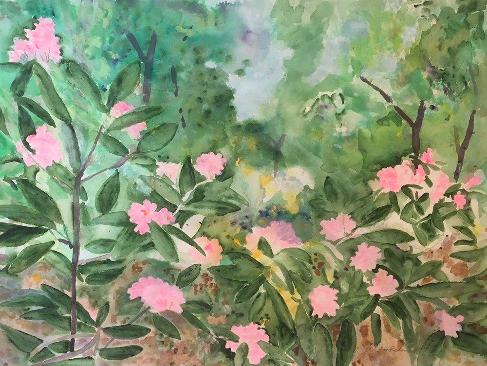 Rhododendron Woods II.jpg