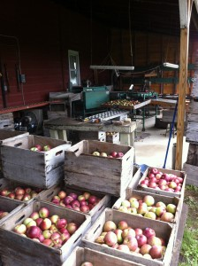 Robert Rider Farm's packing space.
