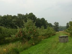 Rider Orchard
