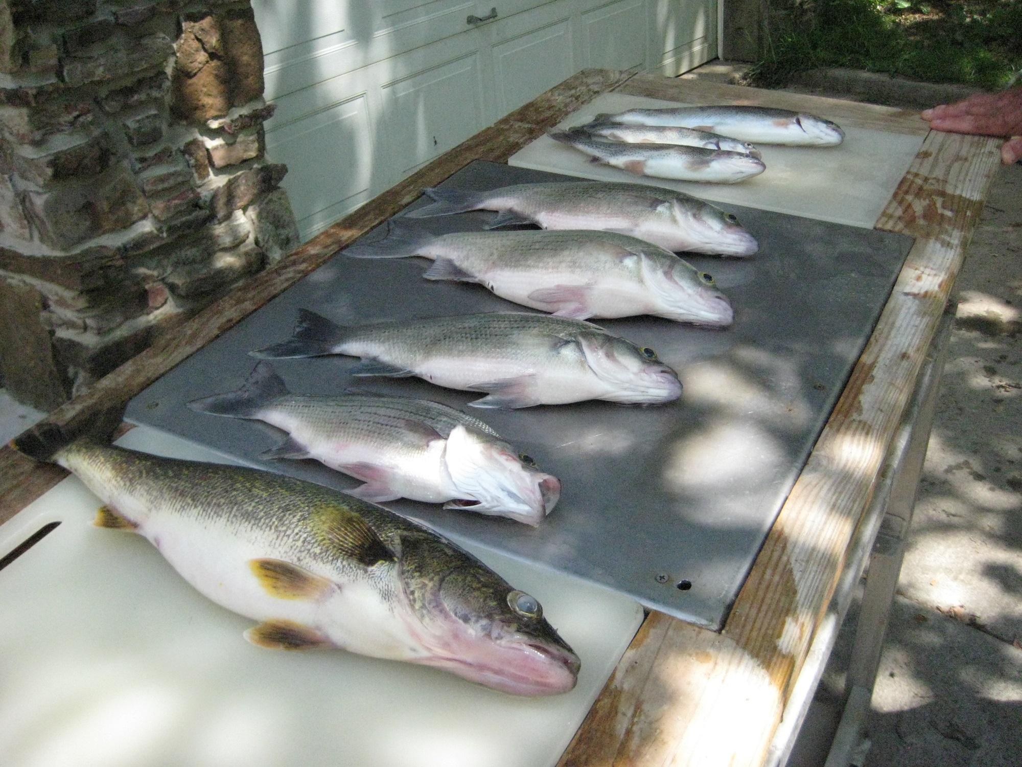 fish 5-15-14 004