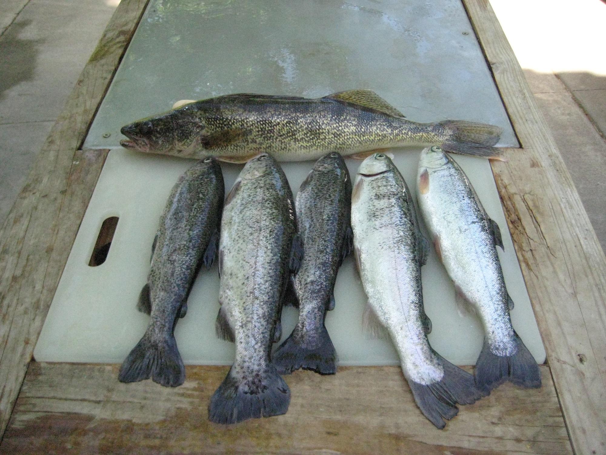 fish 5-4-14 001