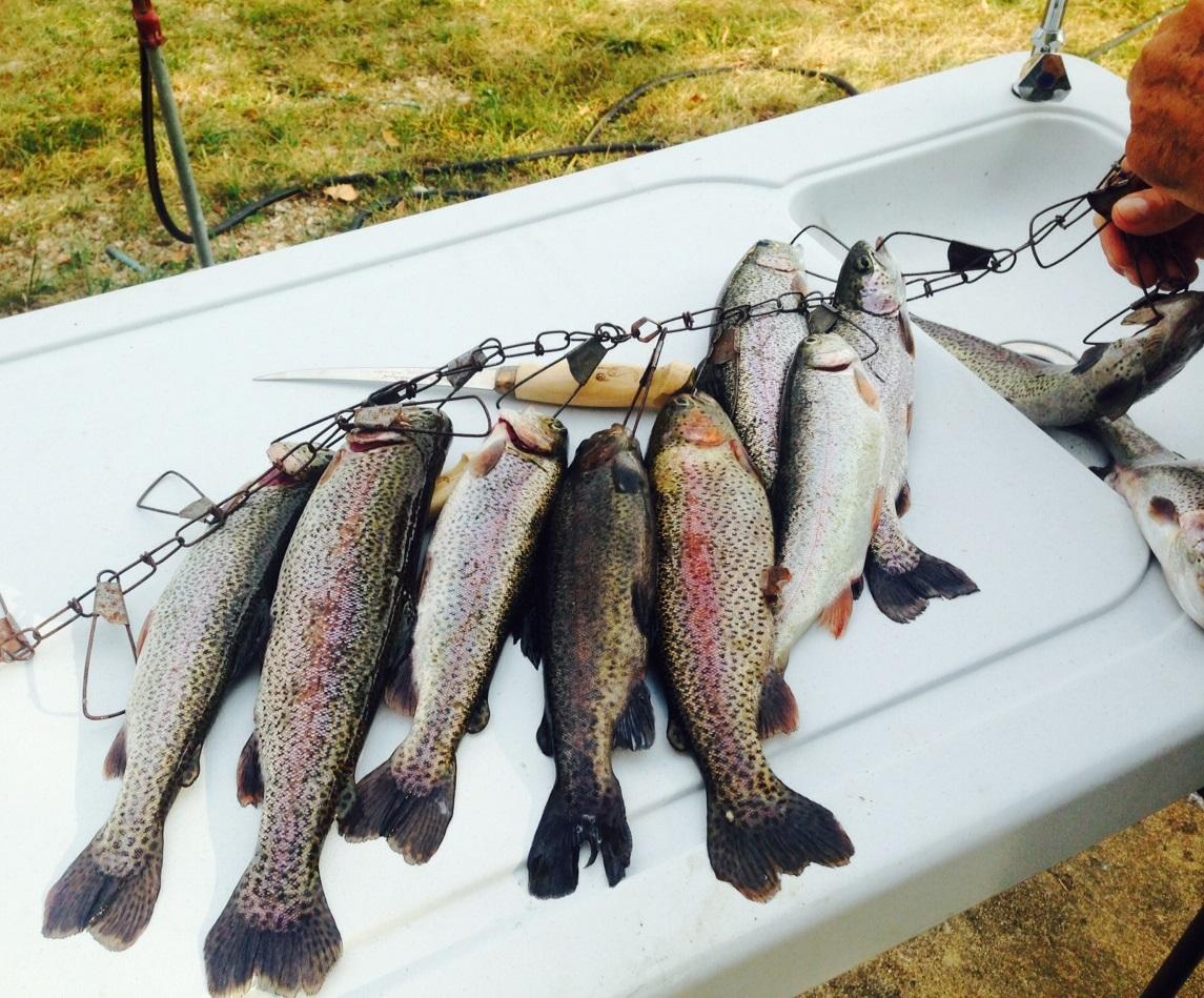 1 toms fish 8-29-14
