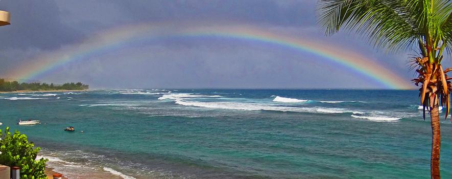 rainbowopt.jpg