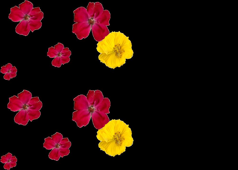 Flowers_vertical.png
