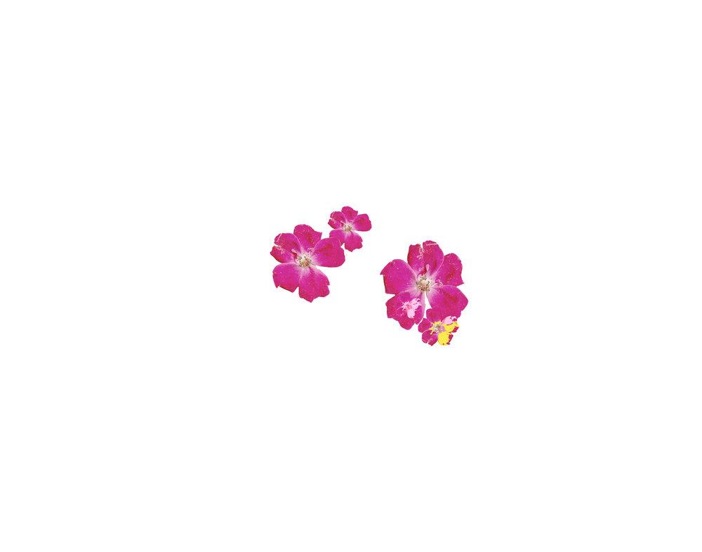 Flowers Page.jpg