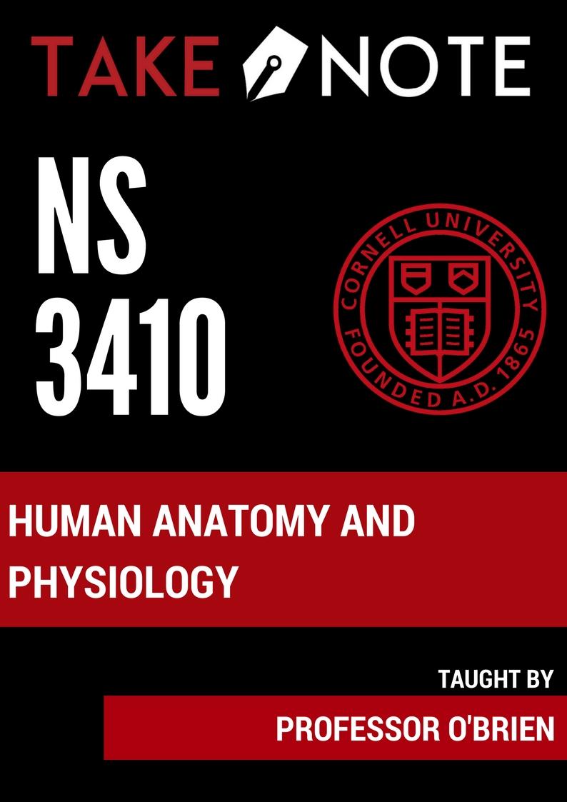 NS 3410.jpg