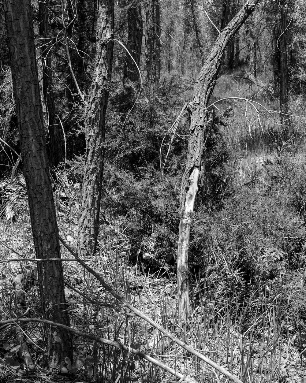 """from the project """"Plum Creek"""", 2015"""
