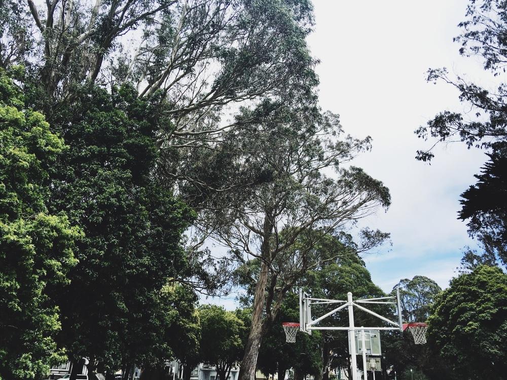 treehoop