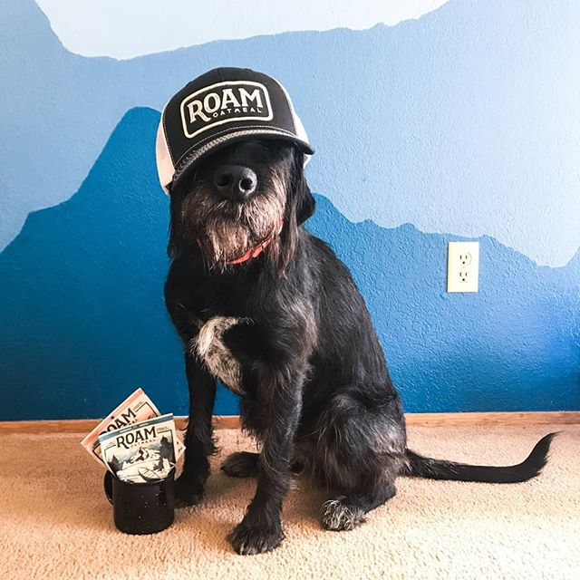 📷 from @ommurillo : Watson the dog received an awesome care package a couple of days ago. He looks a little sad he can't eat some of the Roam Oatmeal due to the chocolate, but that new lid looks great. #stylishdog #wakeupandroam ⠀⠀⠀⠀⠀⠀⠀⠀⠀ #buylocal #madeinpdx #madeinioregon #dogsofinstagram #dogdays