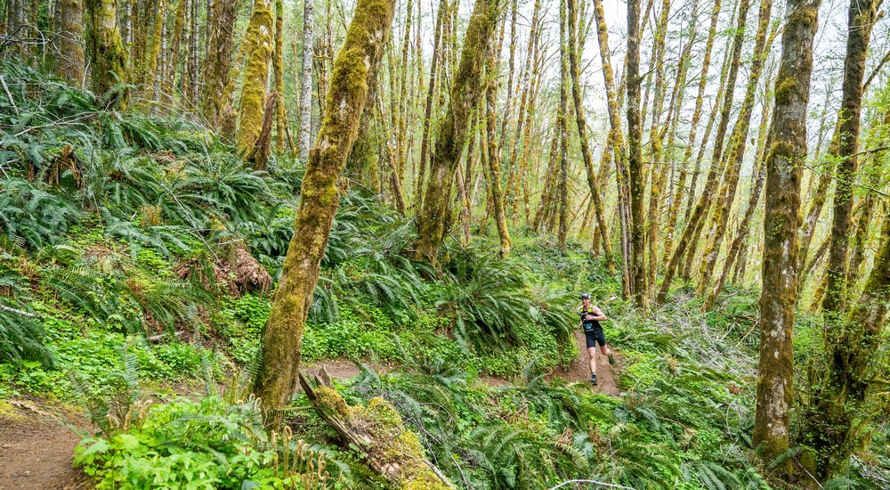 Running through the Tillamook Forest - Photo Curtesy of Pursuit Films (www.pursuitfilms.com)