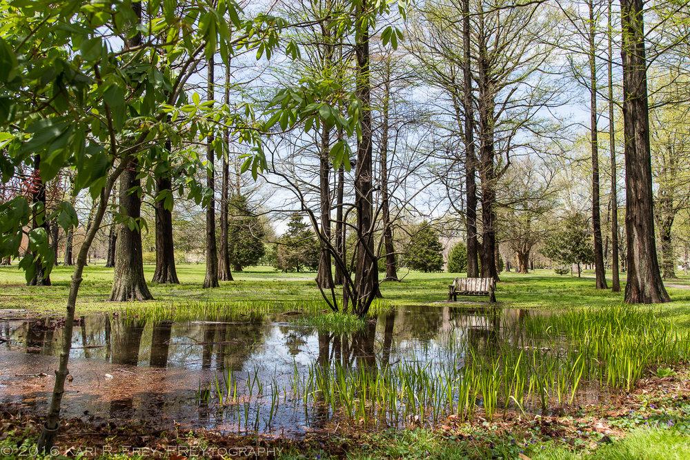 woodland pool 1